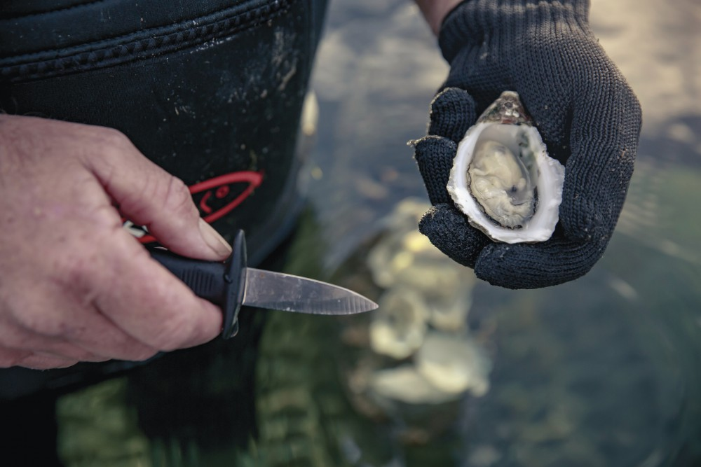 Pure Coffin Bay Oysters_3